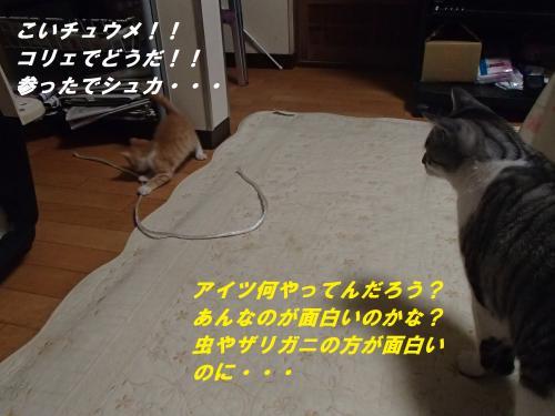P6241185_convert_20140628110455.jpg