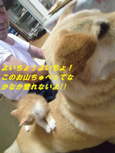 P6251230_convert_20140629092946.jpg