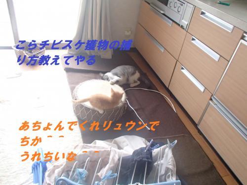 P6261235_convert_20140629093104.jpg