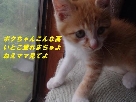 P6281246_convert_20140703091806.jpg