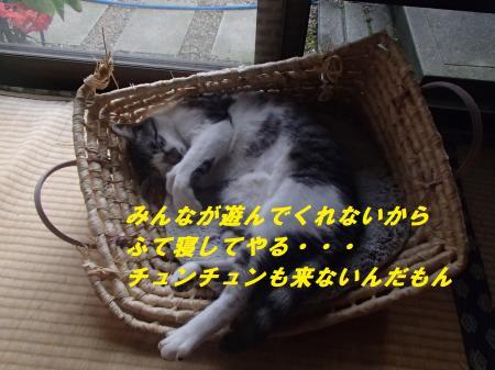 P7081305_convert_20140708092820.jpg