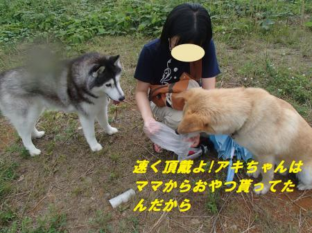 P7091306_convert_20140710094321.jpg