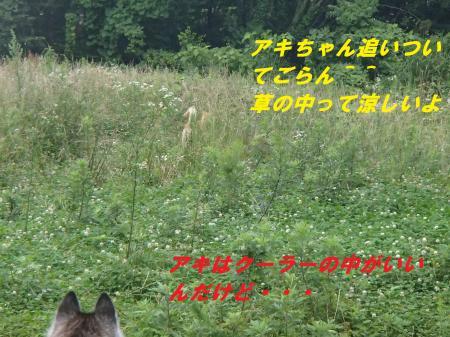 P7091309_convert_20140710094357.jpg
