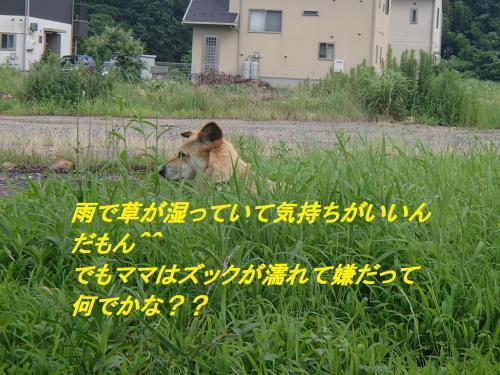 P7171333_convert_20140718100922.jpg
