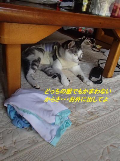P7261408_convert_20140729085221.jpg