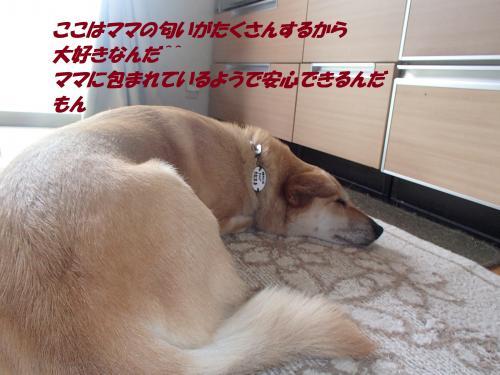 P8051461_convert_20140806093557.jpg