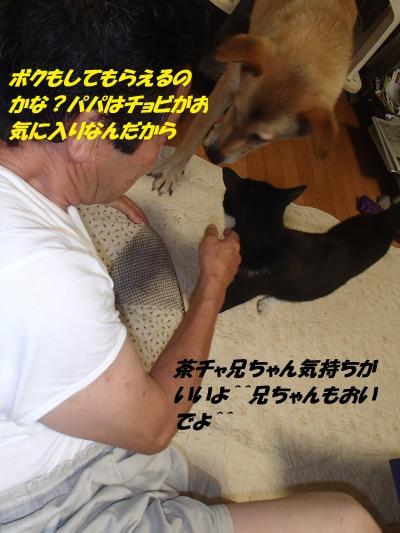 P8051463_convert_20140806093420.jpg