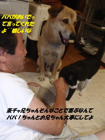 P8051464_convert_20140806093508.jpg