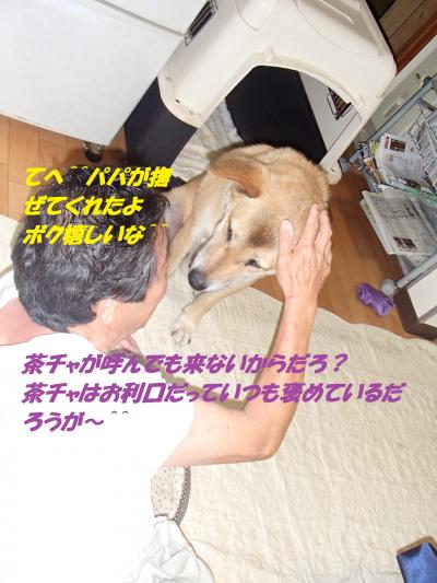 P8051465_convert_20140806093525.jpg