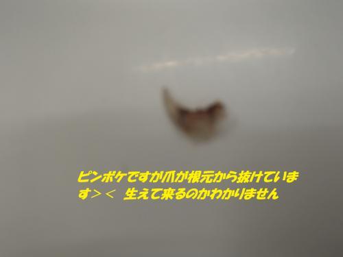 P8071475_convert_20140809083731.jpg