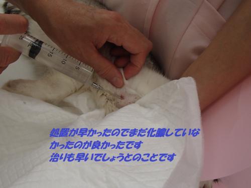 P8071476_convert_20140809083810.jpg