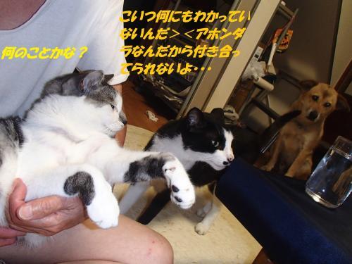 P8071486_convert_20140808095640.jpg