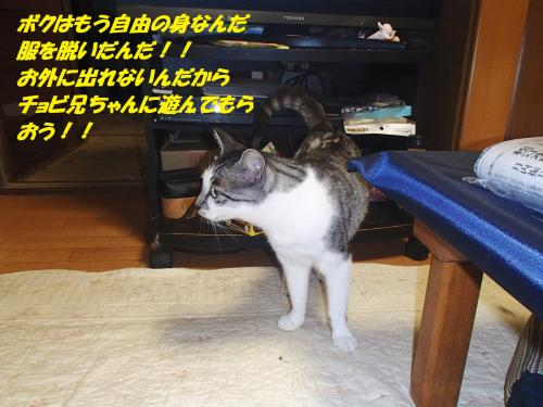 P8081493_convert_20140808095709.jpg