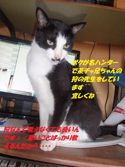 P8091508_convert_20140810081049.jpg