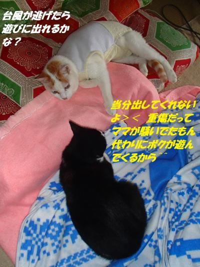 P8091512_convert_20140811151036.jpg