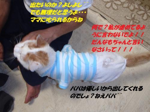 P8091515_convert_20140811151239.jpg