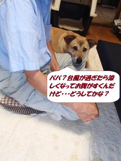 P8101527_convert_20140813095515.jpg