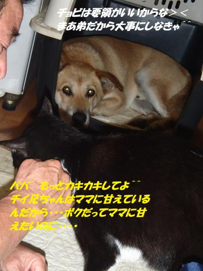 P8121532_convert_20140813095548.jpg
