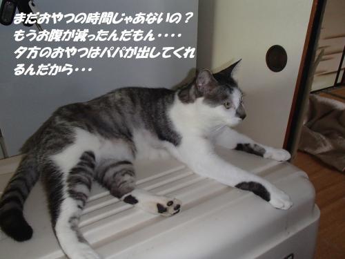 P8131533_convert_20140815135754.jpg
