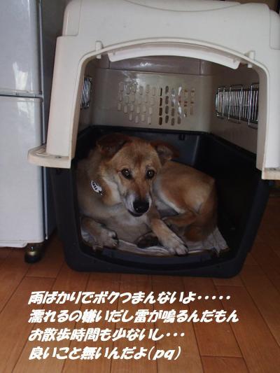 P8131534_convert_20140815135840.jpg