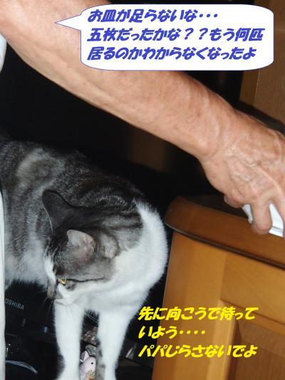 P8131536_convert_20140815135920.jpg