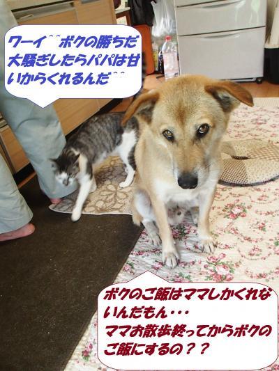 P8131537_convert_20140815135938.jpg