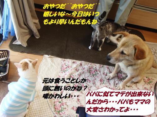 P8131538_convert_20140815140000.jpg