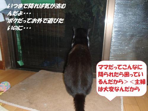 P8151549+(2)_convert_20140816102001.jpg