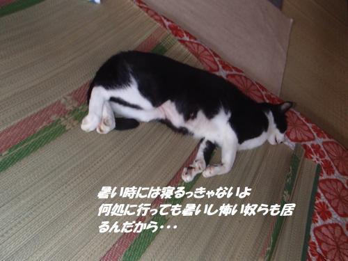 P8201565_convert_20140821085458.jpg