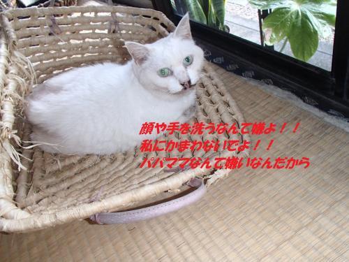 P8211576_convert_20140822075948.jpg