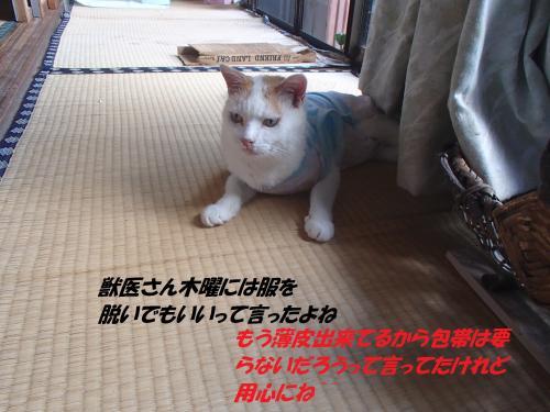 P8211577_convert_20140822092725.jpg