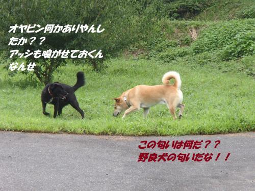 P8241580+(3)_convert_20140825091615.jpg