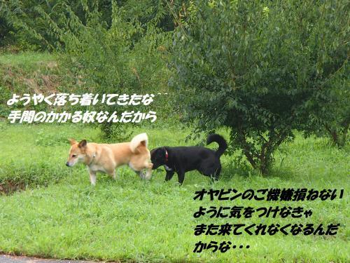 P8241581+(3)_convert_20140825091634.jpg