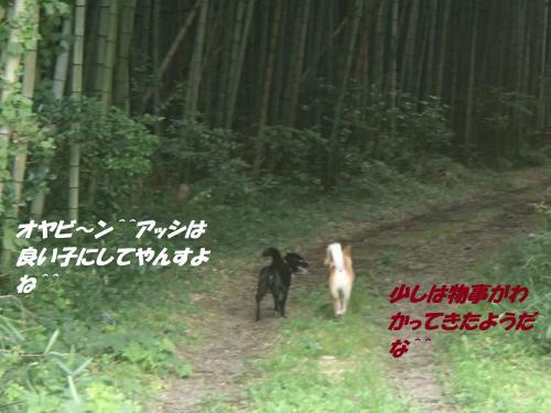 P8241583_convert_20140825091650.jpg
