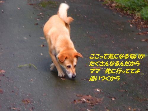 P8261619_convert_20140828093923.jpg