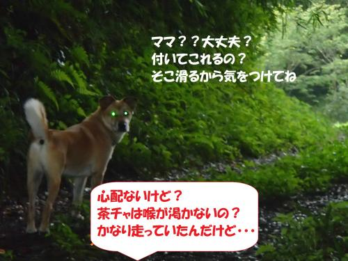 P9041685_convert_20140908143557.jpg