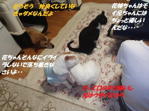 P9041699_convert_20140906123740.jpg