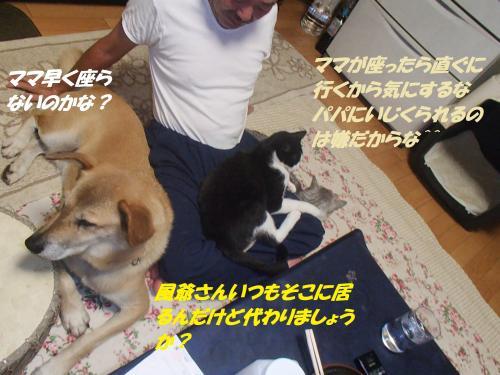 P9081729_convert_20140913100125.jpg