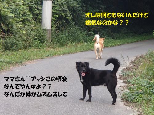 P9101734_convert_20140912100003.jpg