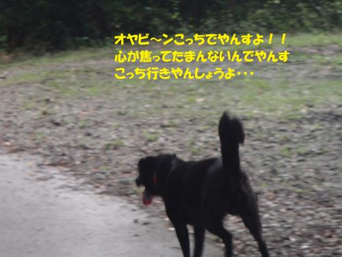 P9101735_convert_20140912100016.jpg