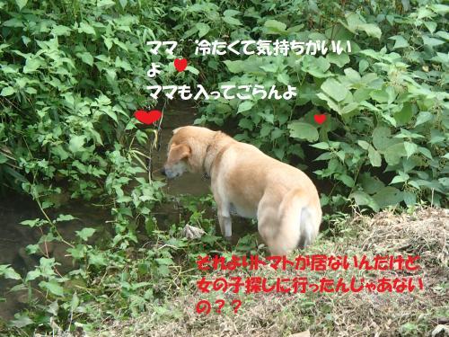 P9101739_convert_20140912100112.jpg