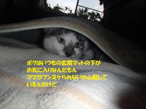 P9121743_convert_20140913100212.jpg