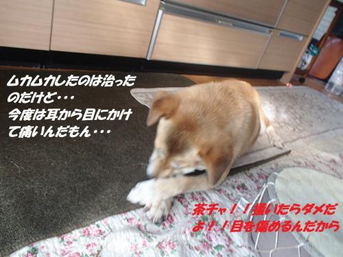 P9141754_convert_20140914102249.jpg