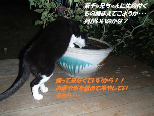 P9151761_convert_20140915124032.jpg