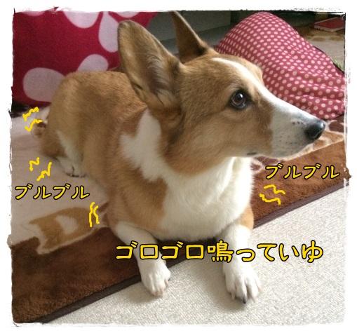 buruji1.jpg