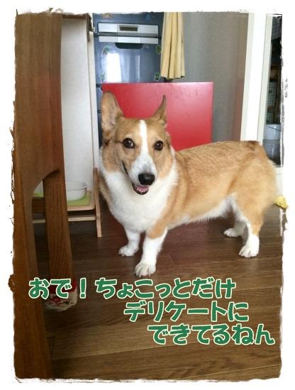 fufu-n.jpg