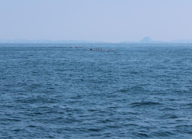 イルカウオッチング4