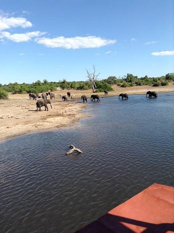2日象の群れ