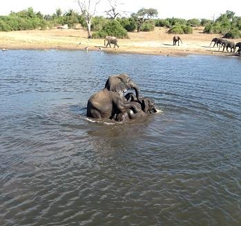 象の戯れ?それとも