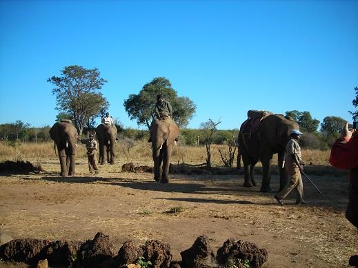ゾウが集まる